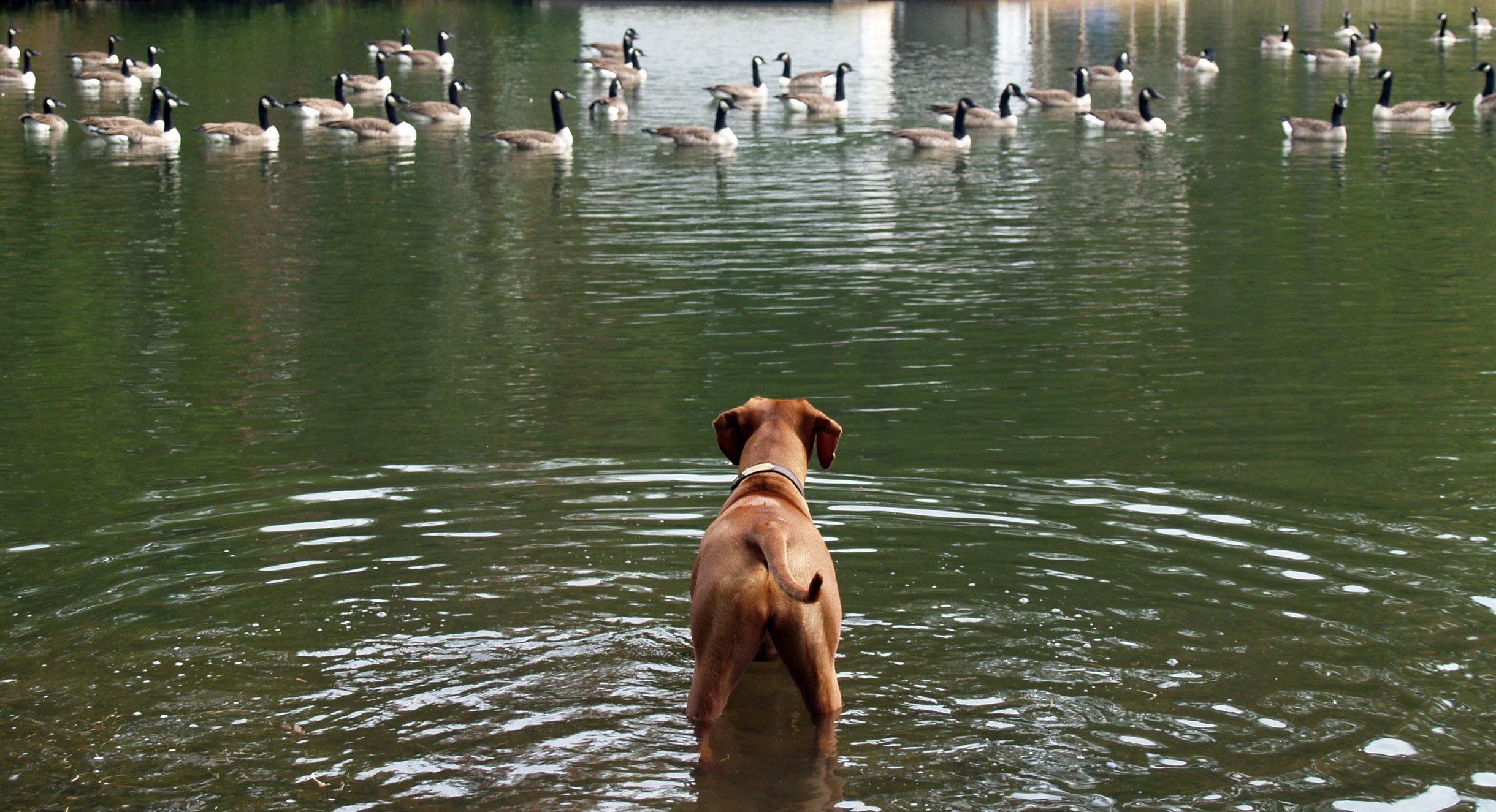 NFV Deployment Tracker – North America: SD-WAN tail wags NFV dog