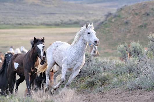 Wild horses NFV Deployment Tracker image Nov 2018
