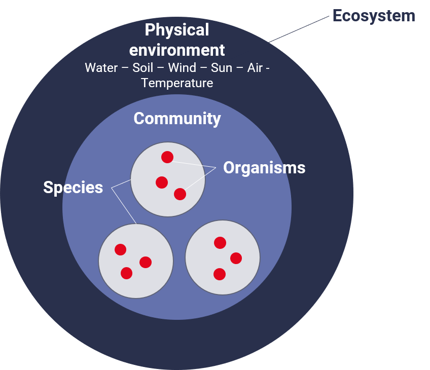 The components of a biological ecosystem